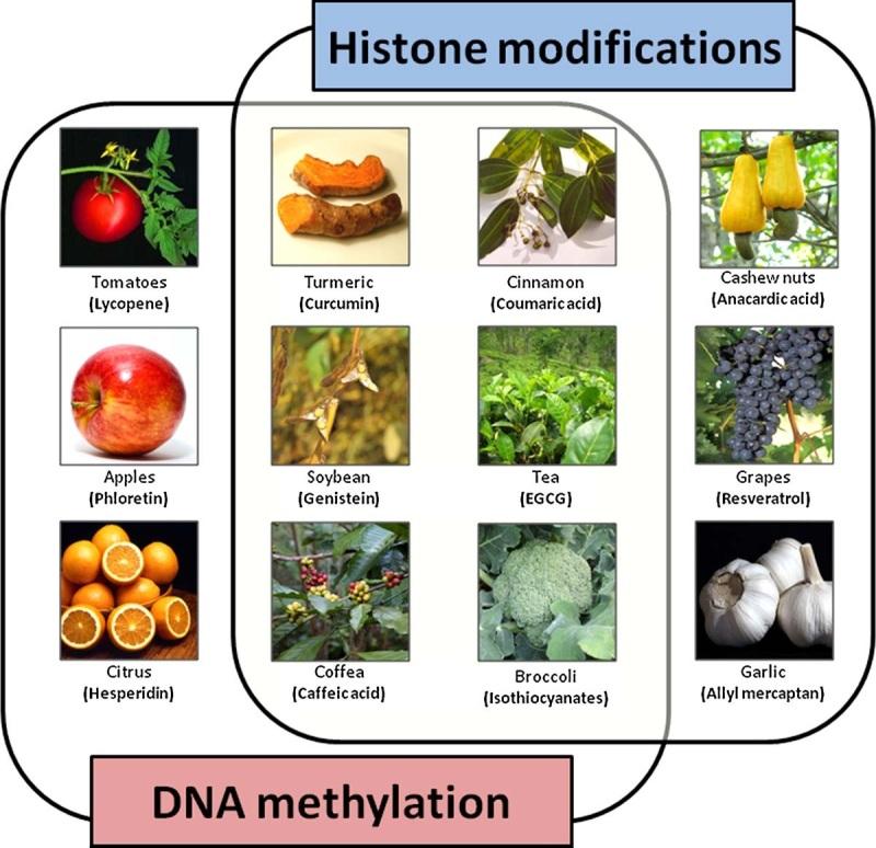 Epigenetics Image