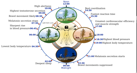 Circadian-rhythm-body