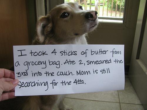 starvingrd dog shame